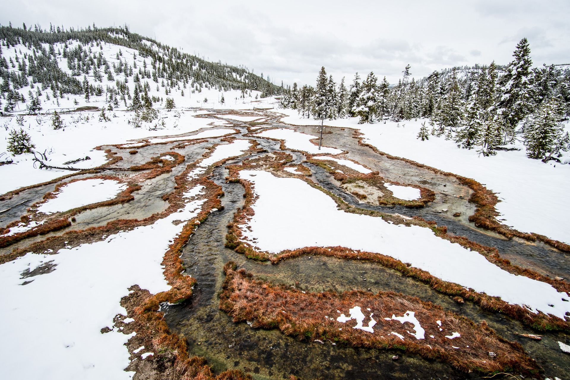 Stream snow red sedges Yellowstone National Park WY -05614