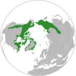 Dryas_integrifolia_distribution