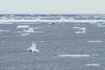 Hudson Bay ice floes Launch Road Churchill ManitobaCanada