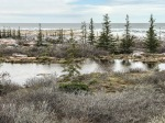 Launch Road taiga pond Hudson Bay Churchill ManitobaCanada-2