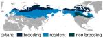 Willow_Ptarmigan_Lagopus_lagopus_distribution_map