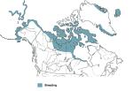 MAP birds_shorebirds_jaegers_parasitic-jaeger