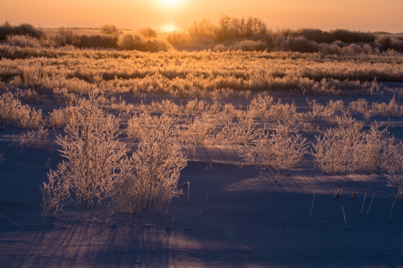 Hoar Frost Morning—Glacial Ridge National Wildlife Refuge-March 9-10