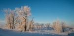 hoar frost Glacial Ridge National Wildlife Refuge Polk County MNSNY04569