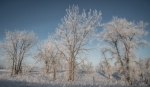 hoar frost Glacial Ridge National Wildlife Refuge Polk County MNSNY04570
