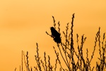 Kimmes-Tobin Wetlands Douglas CountyWIIMG_7716